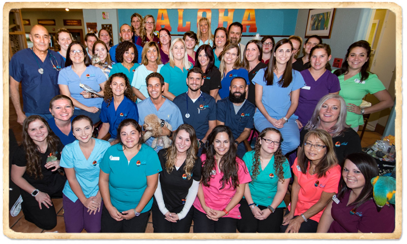 Pet Hospital In Indian Harbour Beach Fl About Aloha Pet Bird Hospital