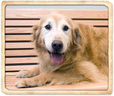 senior pet care in indian harbour beach